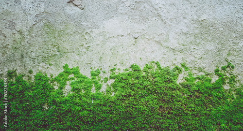 Fototapeta Bright green moss texture on the stone wall. Photo depicting a bright green lichen on the old stone wall. Closeup, macro view. Slovenia, Ljubljana city, Castle area. obraz