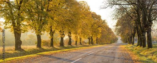 Keuken foto achterwand Begraafplaats panorama of autumn trees and alone road