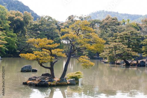 Pinus thunbergii or Japanese black pine growing on an islet near Kinkaku-ji or t Tableau sur Toile