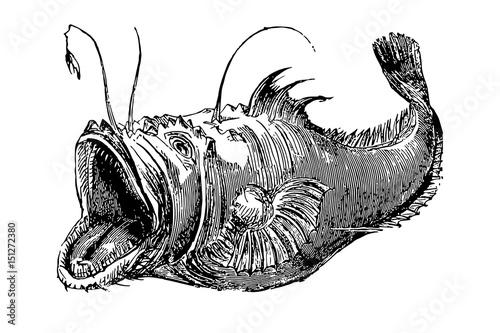 Lophius Frog-fish Tableau sur Toile