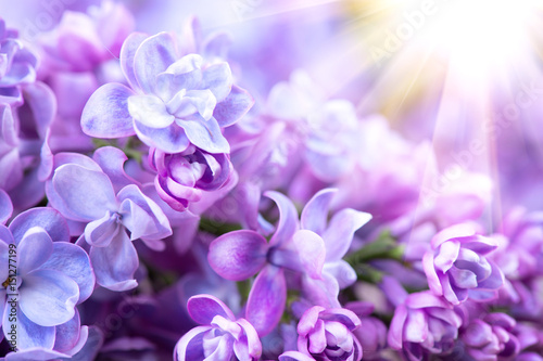 Deurstickers Lilac Lilac flowers bunch violet art design background. Beautiful violet lilac flower closeup