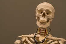 Skeleton With Stethoscope