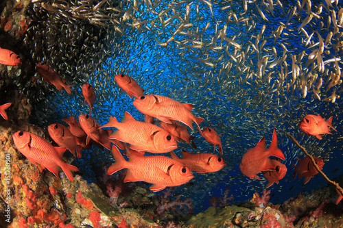 Poster Sous-marin Coral reef and fish underwater