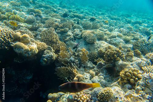 Foto op Plexiglas Panoramafoto s beautiful coral reef under water
