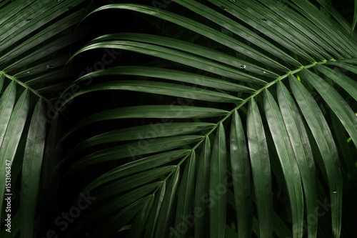 Canvas Prints Palm tree palm leaf for texture or background