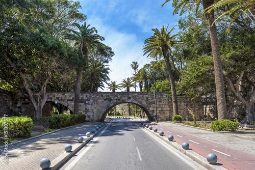 Fotografie, Obraz Palm avenue in Kos island, Greece