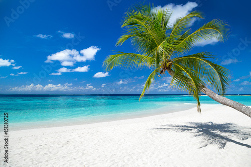 In de dag Strand coco palm on tropical paradise island dream beach