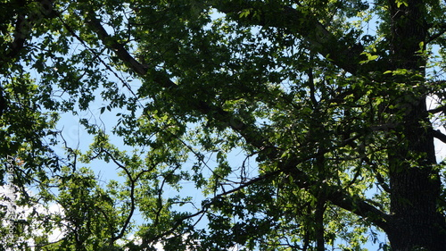 Foto op Canvas Bomen Sky Through The Trees