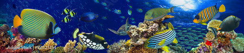 Poster Coral reefs colorful wide underwater coral reef panorama banner background with many fishes turtle and marine life