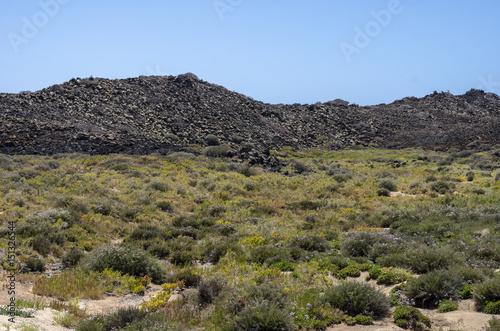 Deurstickers Canarische Eilanden Flora of Lobos Island in Canary Islands, Spain