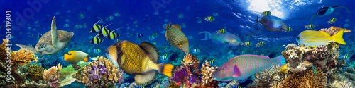 Keuken foto achterwand Panoramafoto s colorful wide underwater coral reef panorama banner background with many fishes turtle and marine life