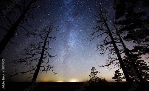 Zdjęcie XXL Nieżywy drewno z gwiazdami i nocnym niebem na tle. Droga Mleczna znajduje się tuż za drzewem.