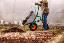 Male Farmer Puts In The Ground Fertilizer Manure