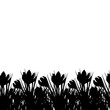 Spring postcard with black small crocus. Early spring flower Crocus for Easter on white background. Vector illustration