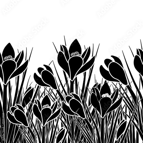 Fotobehang Bloemen zwart wit Spring postcard with black crocus and white stroke. Early spring flower Crocus for Easter on white background. Vector illustration