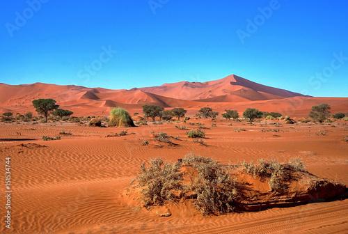 Fotografie, Obraz  Bäume und rote Sanddünen von Sossusvlei in Namibia