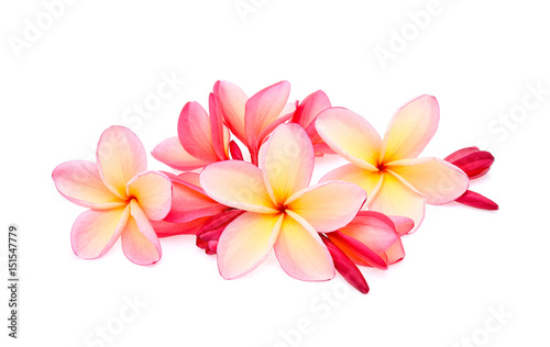 Deurstickers Frangipani frangipani (plumeria) isolated on white background