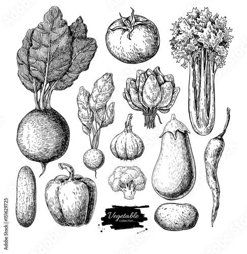 Fotografie, Obraz  Vegetable hand drawn vector set. Isolated vegatarian engraved st
