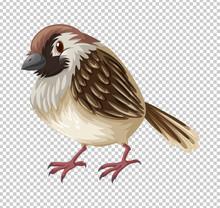 Sparrow Bird On Transparent Background