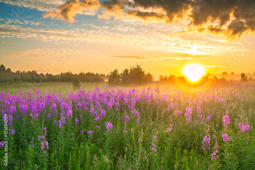 Poster Honey landscape with sunrise and blossoming meadow