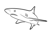 Shark Line Art, A Hand Drawn Vector Cartoon Illustration Of A Shark