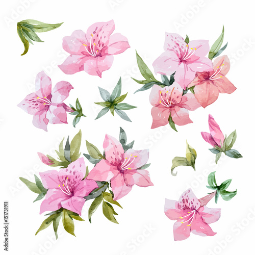 Watercolor rhododendron flowers Canvas Print