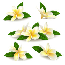 Realistic Vector Plumeria (frangipani) Flowers With Leaves Isolated On White Background.