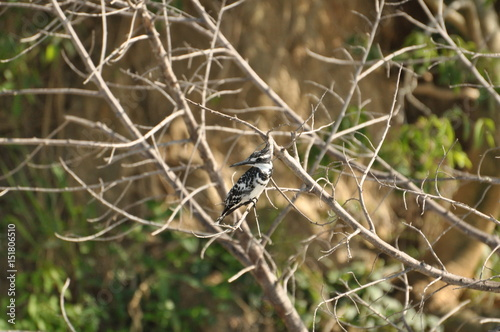 Foto op Plexiglas Krokodil Safari Animals and Wildlife