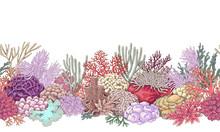 Coral Reef Line Horizontal Pat...