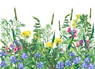 Fototapeta Łąka Panoramic view of wild meadow flowers and grass, isolated on white background. Horizontal border with field flowers and herbs. Watercolor hand drawn painting illustration.