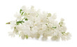 Branch of lilac flowers on white background