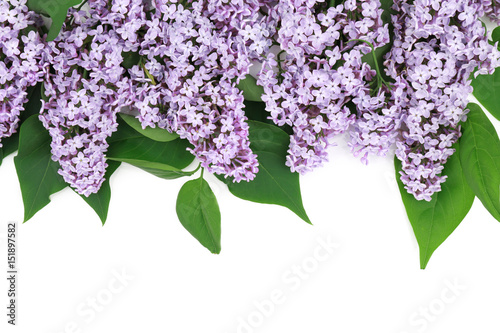 Foto op Canvas Lilac Beautiful blooming bouquet of lilac flowers on white background