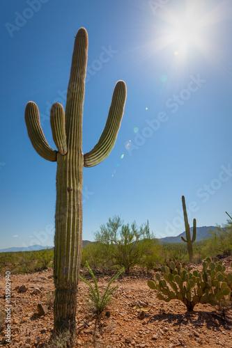 Tuinposter Cactus Saguaro Cactus with Sun Flare in the Southwest US