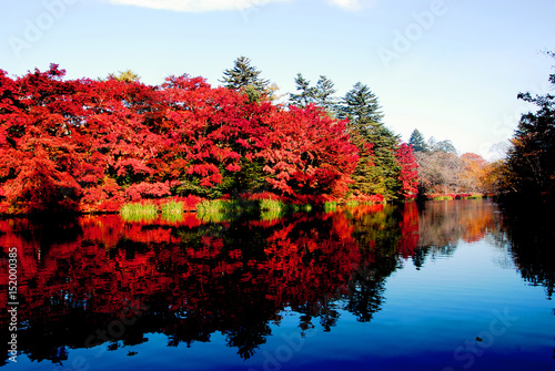 In de dag Bomen 雲場池の紅葉