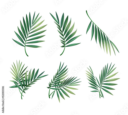 Photo Set of palm leaves