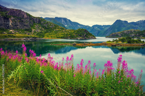 Recess Fitting Khaki View of the fjord. Rocky seashore with reflection, blue cloudy sky, and blossoming pink flowers. Beautiful nature Norway.