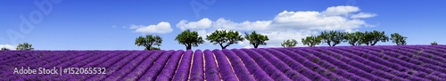 Stickers pour porte Lavande LAVENDER IN SOUTH OF FRANCE