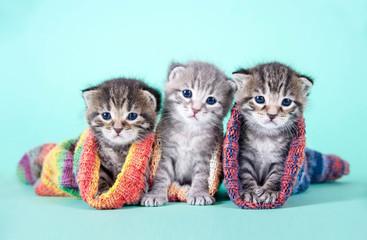 Fototapeta na wymiar Drei kleine Katzenbabys in Strümpfen