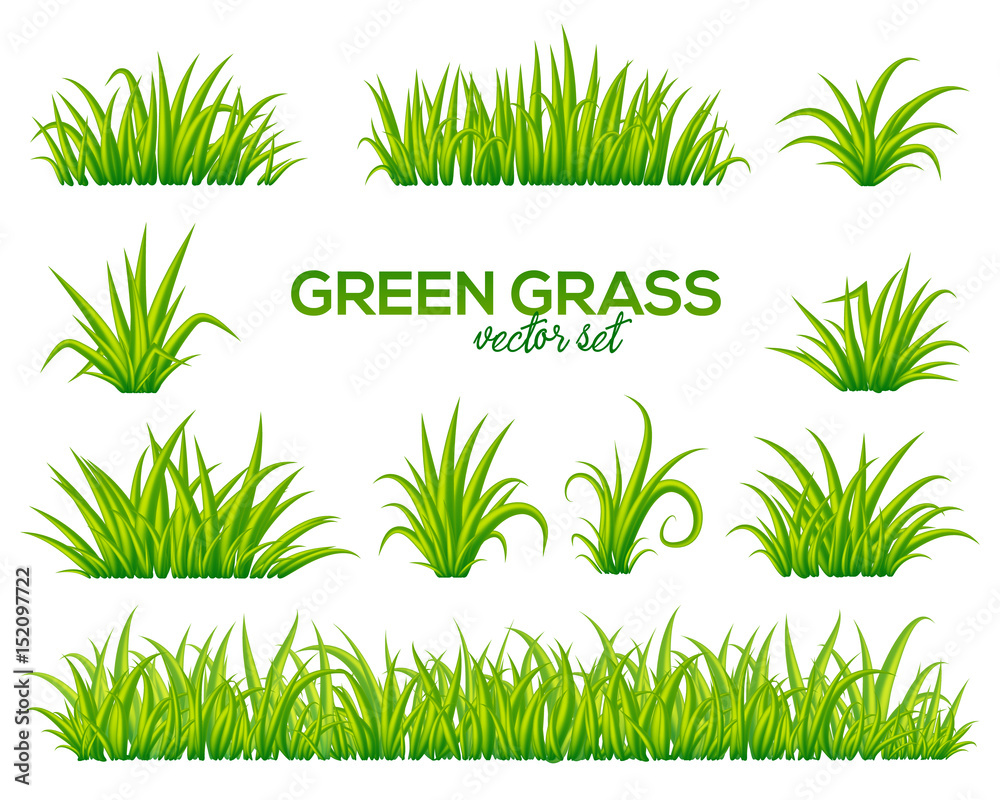 Fototapety, obrazy: Vector tufts of grass isolated on white background