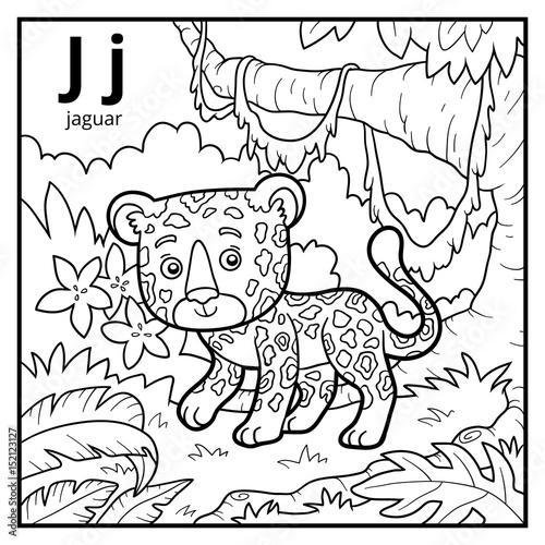 52 Jaguar