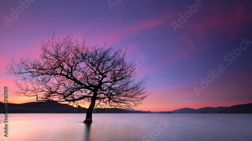 Beautiful sunset over a solitary tree into a lake