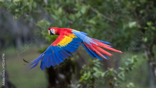 Photo Scarlet Macaw