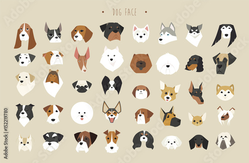 Foto cute dogs faces breed set