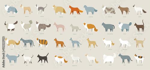 Fotografering  cat breed set vector illustration flat design