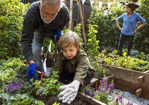 Fotografie, Obraz  Family planting vegetable from backyard garden