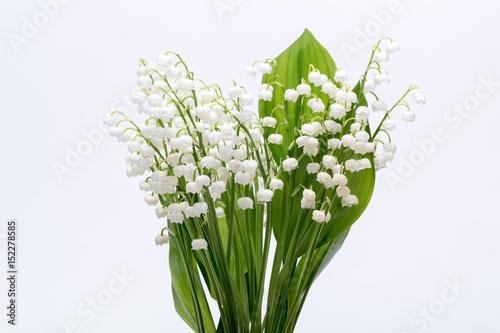 Foto auf AluDibond Maiglöckchen Lily of the Valley (Convallaria Majalis) isolated on white