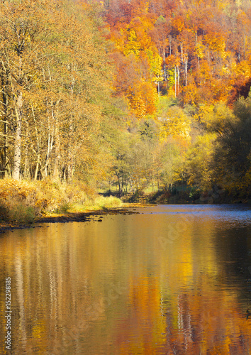 Poster Autumn River with reflexion of autumnal forest