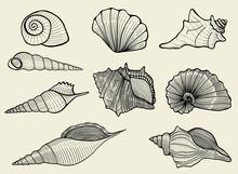 Seashells On Beige Background
