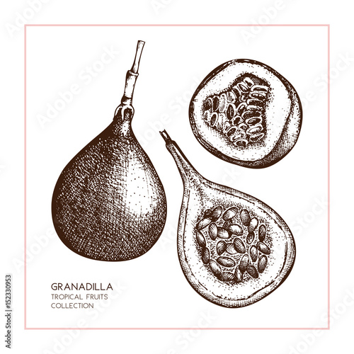sweet-granadilla-illustration