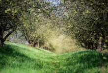 Abstract Blurred Forest Path B...